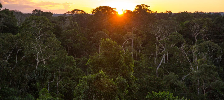 Solen går ned over regnskog