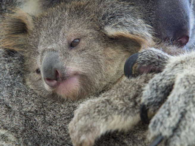 © naturepl.com / Suzi Eszterhas / WWF