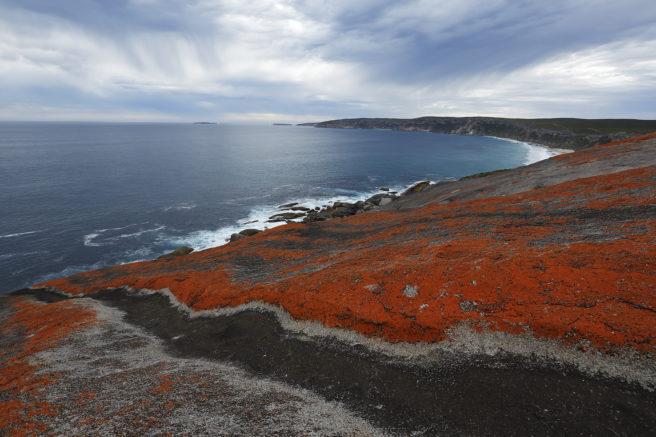 Kystlandskap med oransje lav