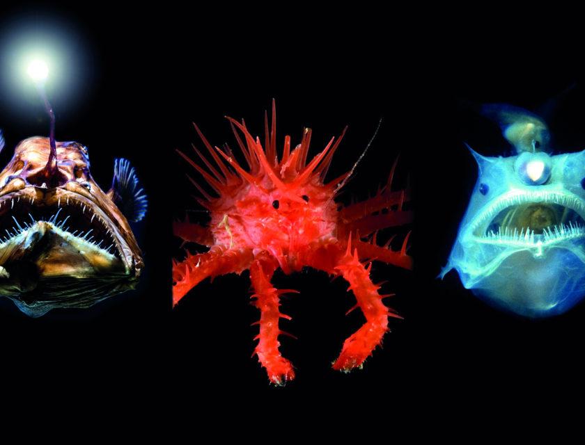 Tre skumle dypvannsfisker i mørkt hav.