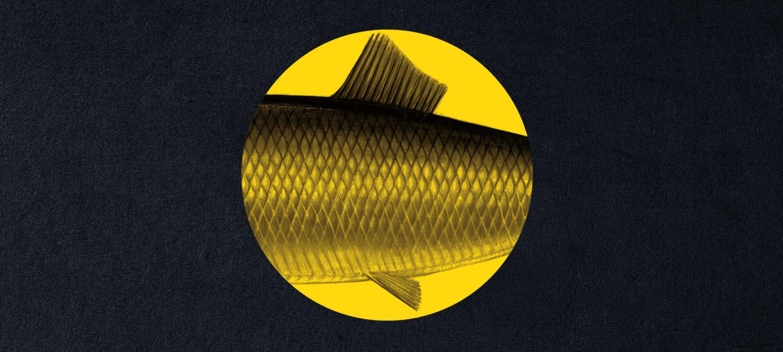 Sort bakgrunn med gul sirkel, inne i sirkelen synes siden av en fisk.