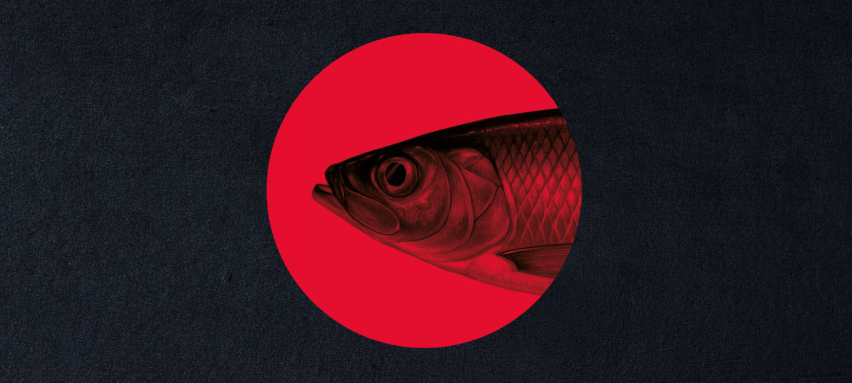 Sort bakgrunn med en rød sirkel. I sirkelen er det et fiskehode.
