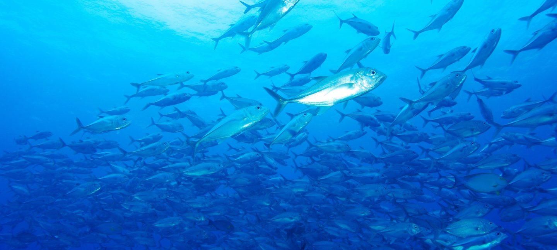 Fiskestim langs kysten av Vanua Levu, Fiji.