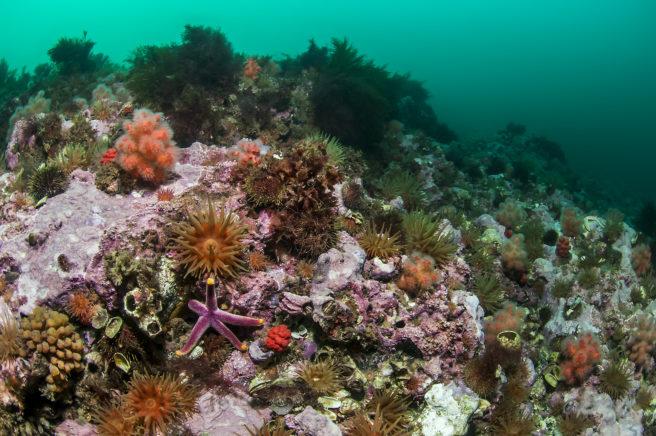 Vakker havbunn utenfor Svalbard, overstrødd med anemoner, sjøstjerner og kråkeboller i forskjellige rødtoner.