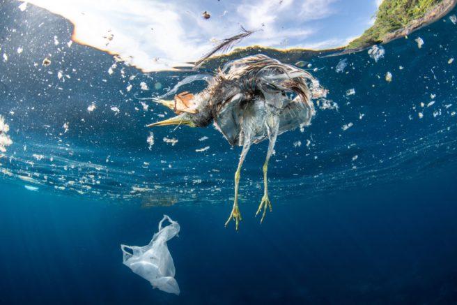 En død fugl innhyllet i plastavfall.