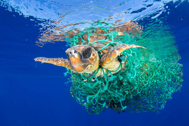 Skilpadde i fiskegarn
