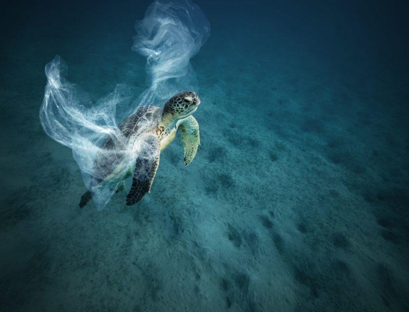 Havskilpadde svømmer under vann med plast rundt kroppen.