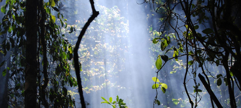 Regnskogene er hjem til mellom 50 og 90 prosent av verdens arter, og mange av disse er ikke engang oppdaget ennå. Her får vi en kikk inn i regnskogen på Madagaskar. Copyright Credit: © WWF / Martina Lippuner