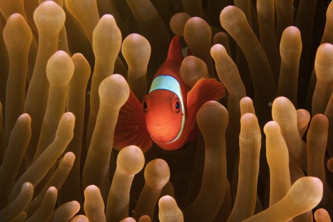 Fisk i koralrevet.