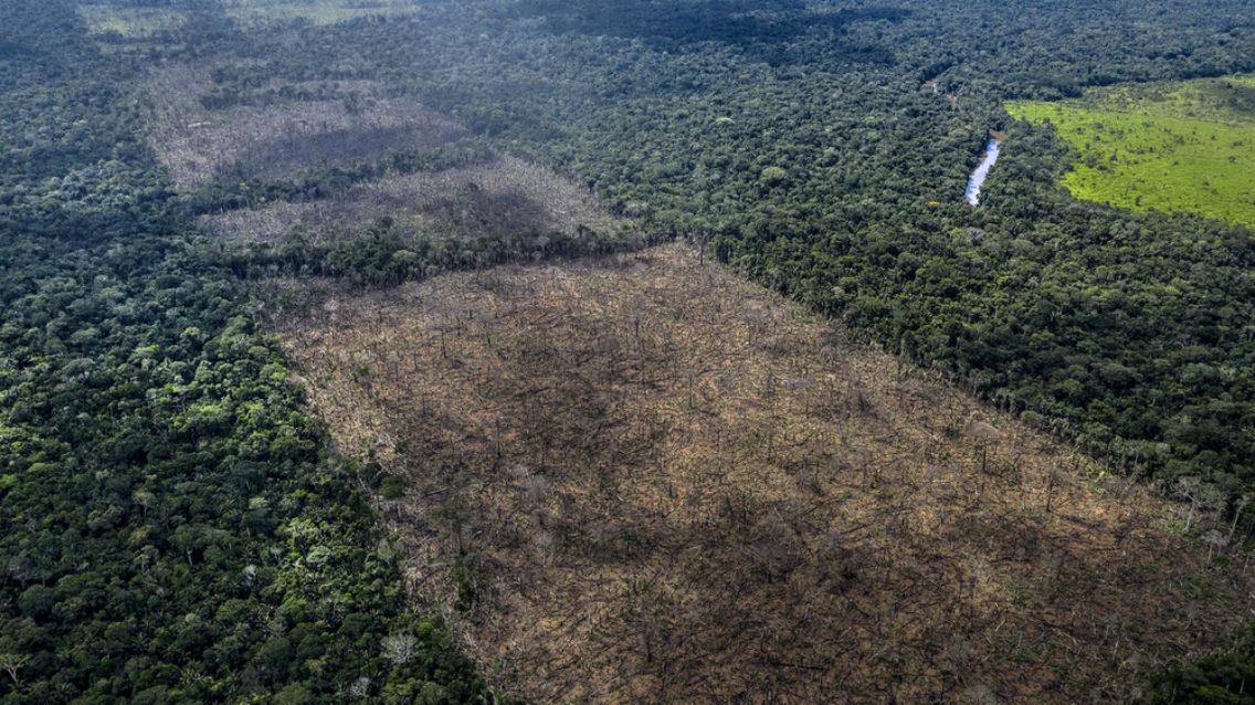 Dronebilde av regnskog, hvor store felter er hugget ned.