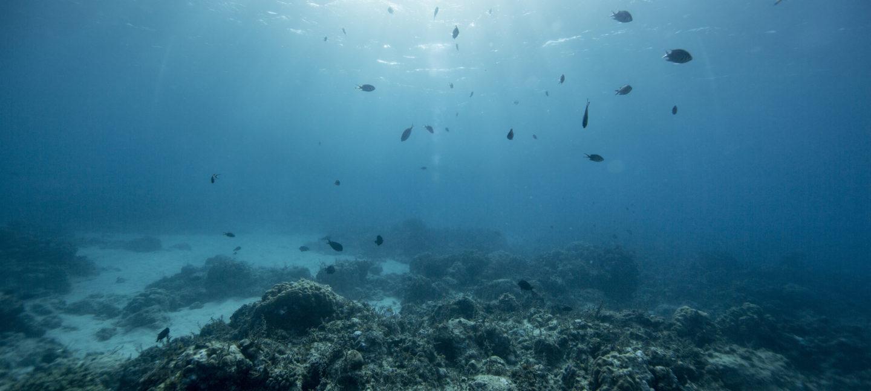 Fisker som svømmer  over et korallrev