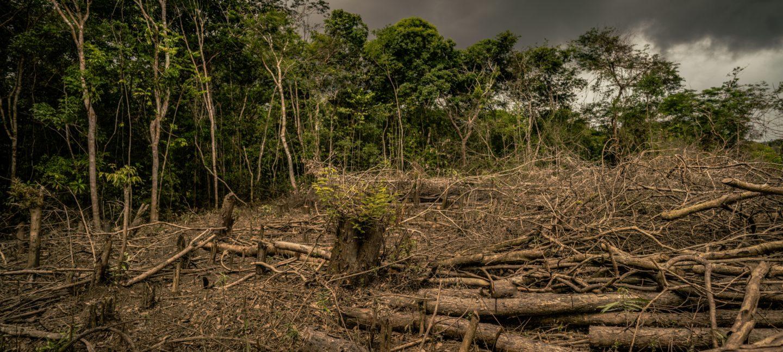 Avskoging i regnskogen, Colombia