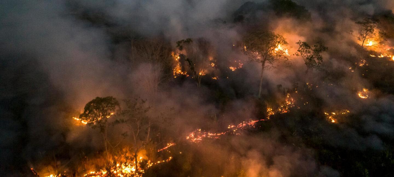 Skog som brenner i Amazonas