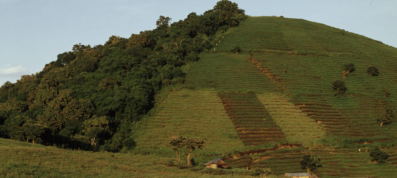 Skogen hogges ned og omgjøres til jordbruksland - på grensa til Virunga nasjonalpark i Den demokratiske republikken Kongo