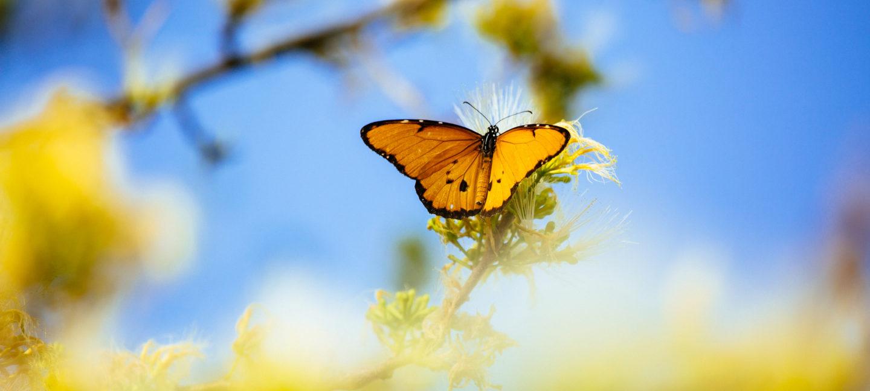 Oransje sommerfugl på blomst mot skyfri himmel