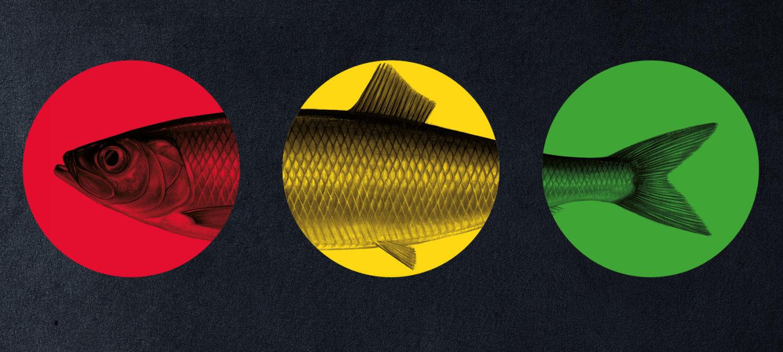 En fisk, med en rød, gul og grønn sirkel over