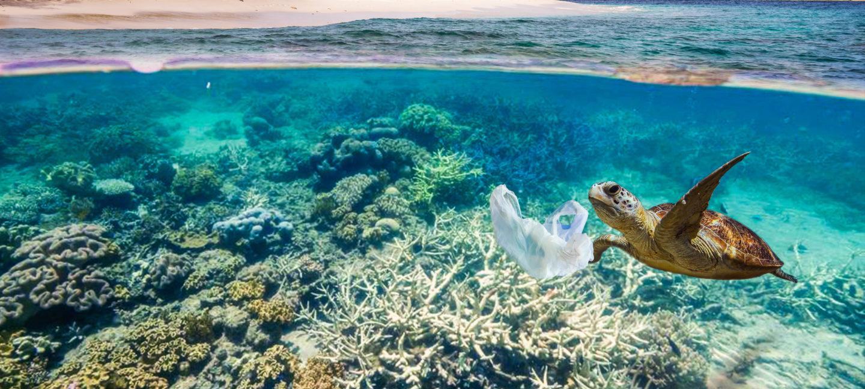 Skilpadde svømmer i krystallklart vann over koraller