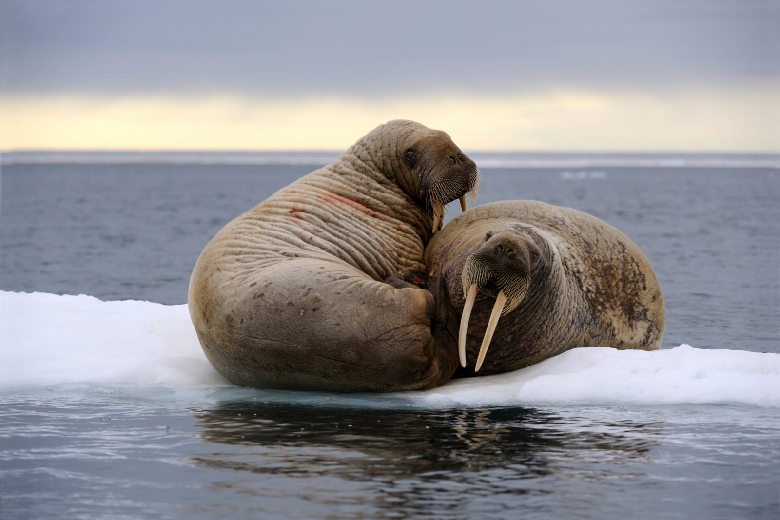 © naturepl.com / Eric Baccega / WWF