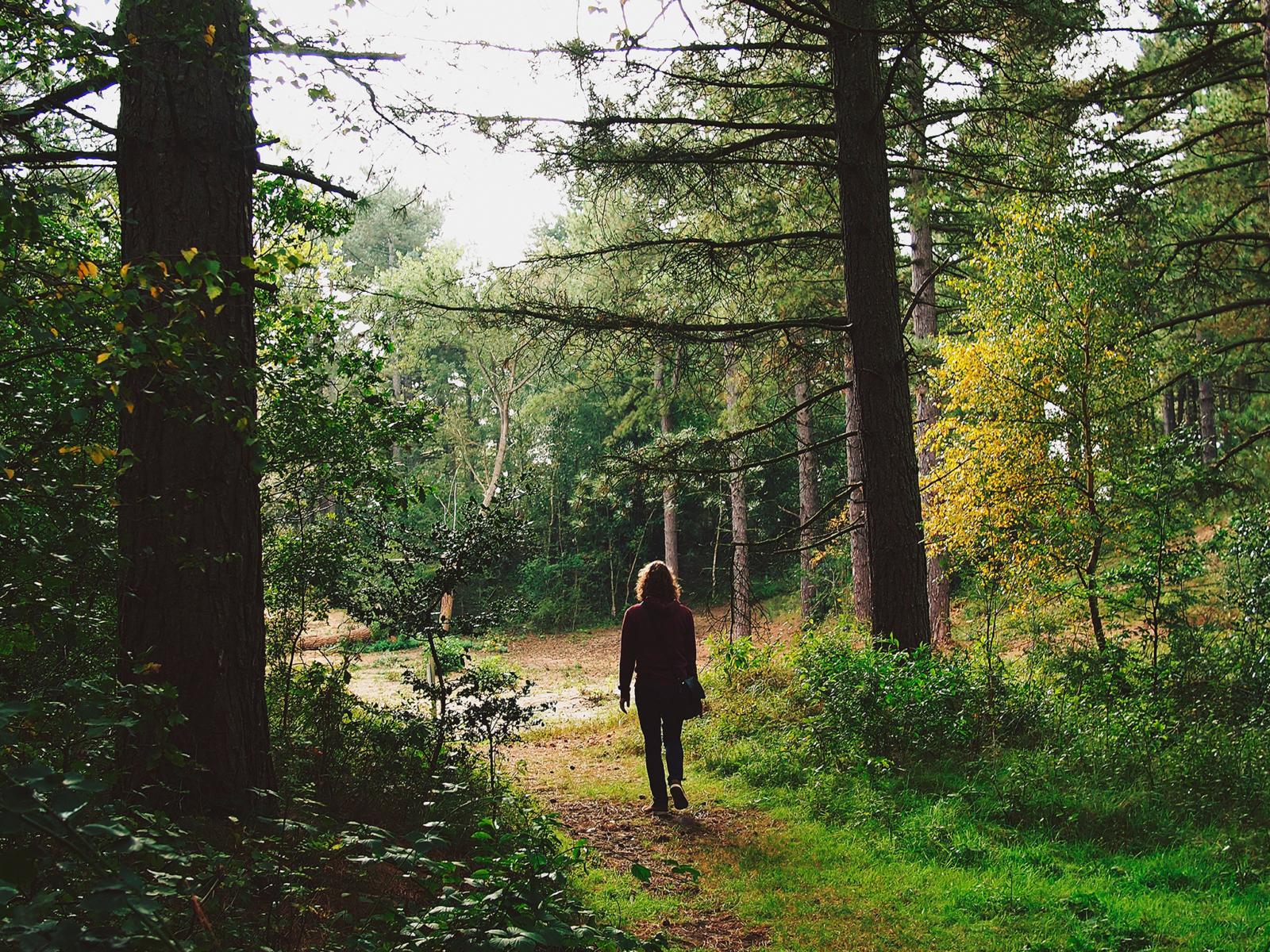 En mann går bortover en sti mellom høye trær