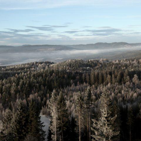 Utsikt over skog