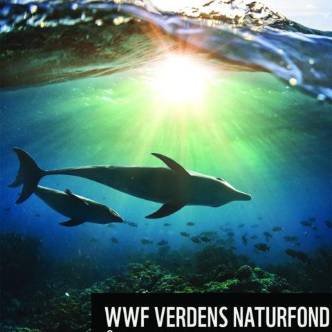 På forsiden av WWFs årsmelding for 2020 sees to delfiner svømmende under vann.
