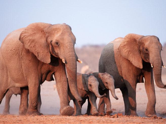 © Martin Harvey / WWF