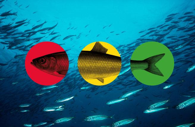 Sildestim i blått hav med trafikklysfisk over