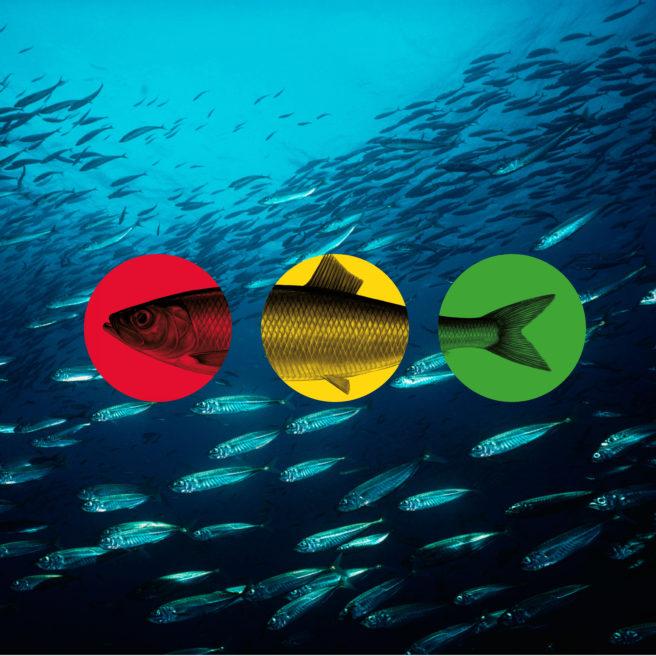 Bilde som illustrerer WWFs sjømatguide.