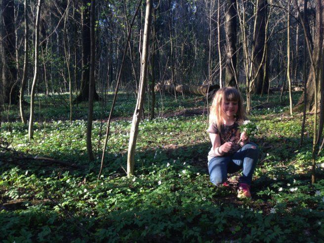 En smilende liten jente med langt, lyst hår sitter på huk og plukker hvitveis i et skoglandskap der solstrålene stikker frem mellom trærne.