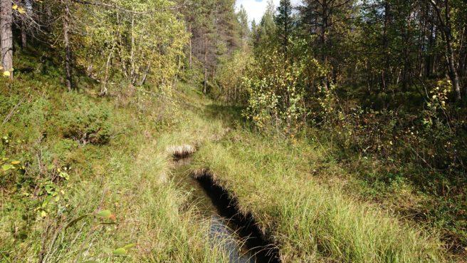 En liten bekk renner gjennom skogen
