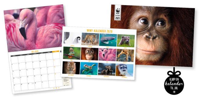 Bilde av WWF-kalendere for 2020