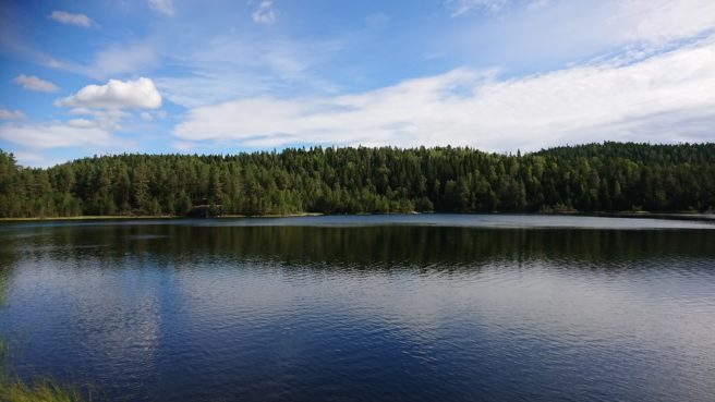 Vann i Østmarka med skogen bak