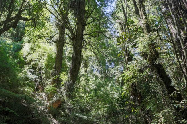 Solen skinner gjennom grønne blader og frodige trær i regnskogen.