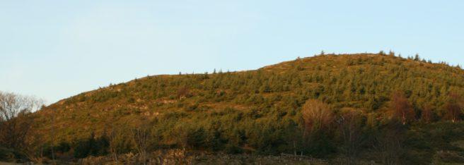 En ås i kystlandskapet dekket av sitkagran