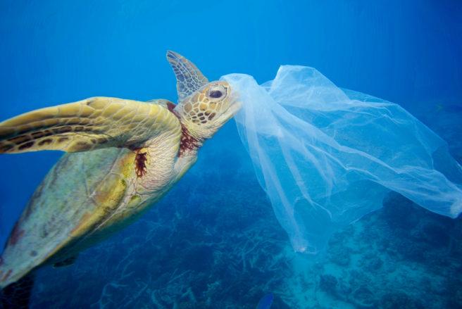 skilpadde med plast