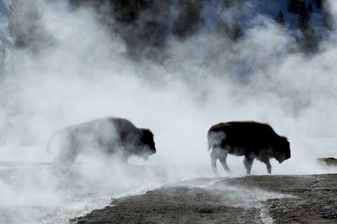 To bisoner kan skimtes gjennom dampen.
