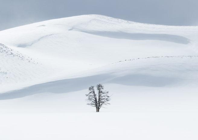 Enslig tre mot snødekte vidder og blå himmel.