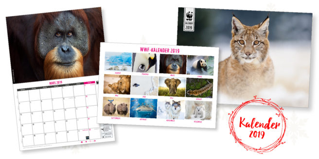 WWFs kalender. Forside med bilde av gaupe, oppslag med bilde av orangutang, og bakside med alle kalenderens 12 bilder.