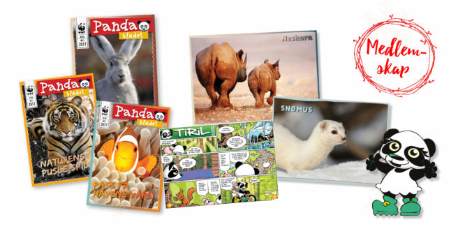 Innhold fra Pandaklubben: Tre ulike utgaver av Pandabladet, plakat og klistremerker, og den tegnede figuren Tiril som hilser barna velkommen